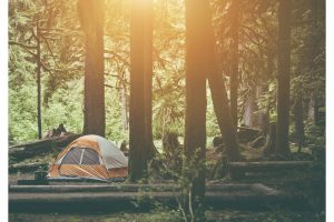 How to Camp in a very Dense Forest?